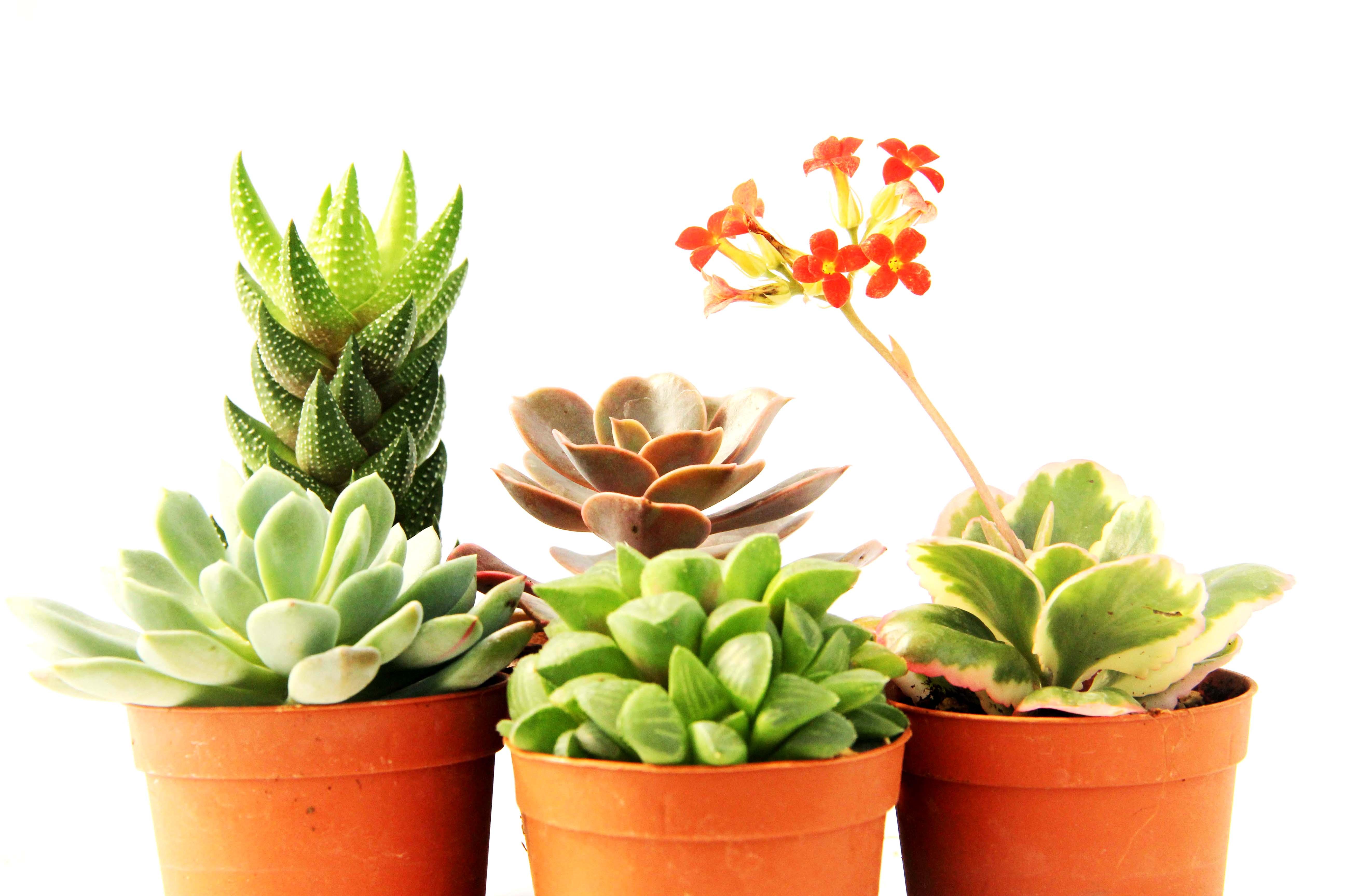 Piante Grasse Da Esterno 5 kg terriccio per piante grasse succulente cactus